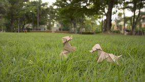 Two dog in yard Royalty Free Stock Photos