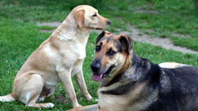 Two dogs. Dogs on grass. Tears, eywater, nostalgia Royalty Free Stock Photo