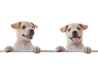 Free Two Dogs Royalty Free Stock Photo - 23758145