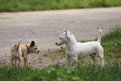 Free Two Dogs Stock Photos - 26118793