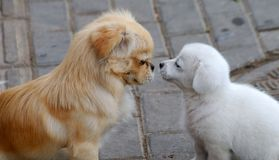 Two dogs. Side view, looking at each other Stock Photo