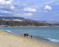 Two dogs on beach Royalty Free Stock Photos