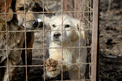 Two dogs in box looking for adoption. Dogs from shelter in his box behind a a fence Royalty Free Stock Photos