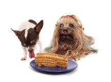 Two dogs and the cake Royalty Free Stock Images