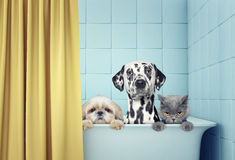 Two dogs and cat in the bath Royalty Free Stock Image