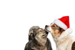 Two  dogs in Christmas hats Stock Images