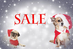 Two dogs Christmas sale Stock Image