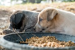 Two dogs are eating food and play with playful gestures royalty free stock photos