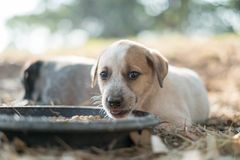 Two dogs are eating food and play with playful gestures stock photography