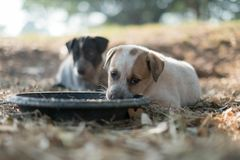 Two dogs are eating food and play with playful gestures stock photo