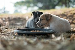 Two dogs are eating food and play with playful gestures royalty free stock image