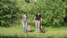 Two dogs are executing commands of their owners. Two dogs are standing, sitting and lying down by the commands of their owners stock video