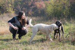 Two dogs fight for a stick. Trainer and her dogs during a obedience training royalty free stock image