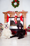 Two dogs by the fireplace decorated for christmas Royalty Free Stock Photography