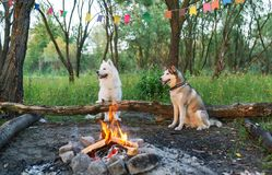 Two dogs in forest with bonfire. Stock Photography