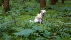 Two dogs in the forest. Two dogs sit in the green forest stock video footage