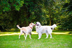 Two dogs Stock Photo