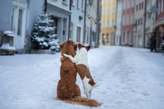 Two dogs hug each other and look at the street of a small town. Pet in the city, walk, trip stock photos