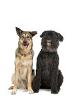 Two dogs isolated on white Stock Photo
