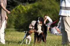 Two dogs on leashes in park Stock Photo