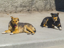 Two dogs lie on the asphalt. Two lazy dogs lie on the asphalt Royalty Free Stock Photo
