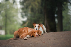 Two dogs lie on the path in the Park Royalty Free Stock Images