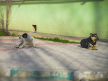 Two dogs lie on sidewalk tile Royalty Free Stock Images