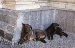 Two dogs. Living on the streets of Rome Stock Photo
