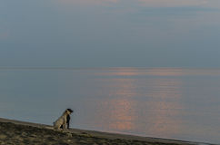 Two dogs looking sunrise. Two dogs looking at the beach the sunrise stock images