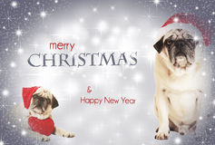 Two dogs merry christmas royalty free stock photos