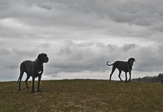 Two dogs on a misty hill Stock Image