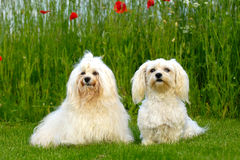 Two dogs in the natur royalty free stock photos