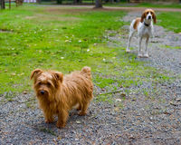 Two dogs outdoors Royalty Free Stock Images