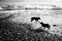 Two dogs playing on a beach royalty free stock photos