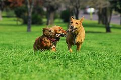 Two dogs playing and having fun stock image