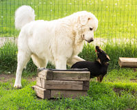 Two dogs playing. In the yard Stock Image