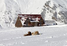 Two dogs rest on ski slope Royalty Free Stock Photography