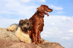 Two dogs. On a rock Stock Images