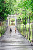 Two dogs run across the hanging wooden bridge Stock Photos