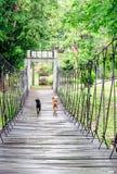 Two dogs run across the hanging wooden bridge Stock Photos