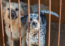 Two dogs at the shelter Royalty Free Stock Image