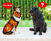 Two dogs, shock Royalty Free Stock Photography
