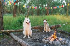 Two dogs sits by the fire. Dogs on vacation on a hike Royalty Free Stock Image
