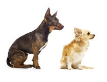 Two dogs sitting by each other looking cute Royalty Free Stock Images