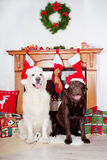 Two dogs sitting by the fireplace Royalty Free Stock Images