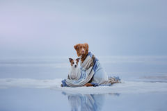 Two Dogs Sitting On The Ice Stock Photography
