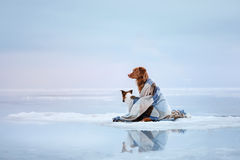 Two Dogs Sitting On The Ice Royalty Free Stock Photo