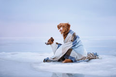 Two Dogs Sitting On The Ice Stock Image