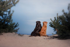 Two dogs are sitting on the sandy shore stock photos
