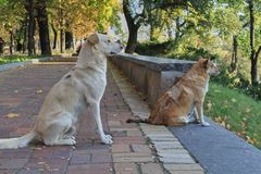 Two dogs are sitting on the road and looking into the distance. close-up stock photo